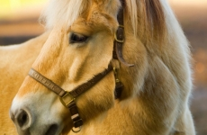 Прочность волос и костей лошади